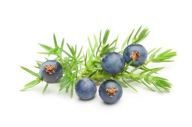 Juniperus Communis Fruit Extract
