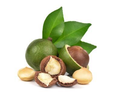 Macadamia Ternifolia Seed Oil - Macadamia Ternifolia Seed Oil
