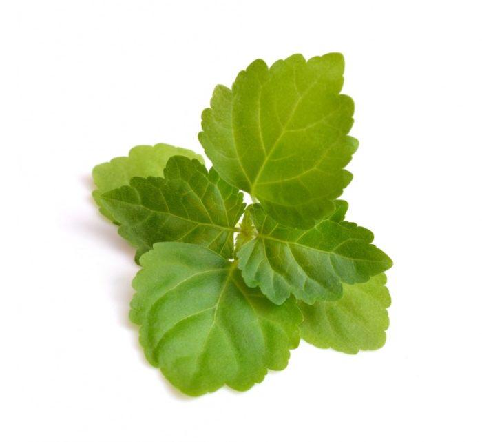 Pogostemon Cablin Leaf Oil 700x641 - Pogostemon Cablin Leaf Oil