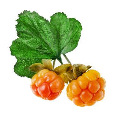 Rubus Chamaemorus Fruit Extract - Rubus Chamaemorus Fruit Extract