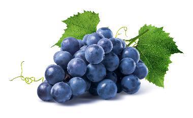 Vitis Vinifera Seed Oil - Vitis Vinifera Seed Oil
