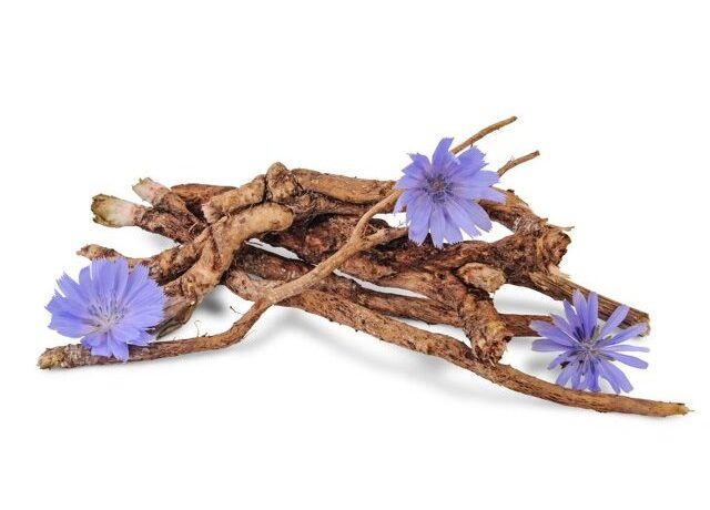 Cichorium Intybus (Chicory) Root Extract