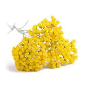 Helichrysum Italicum Flower Water