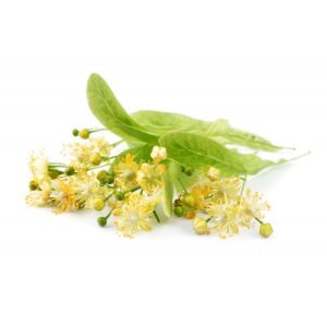 Tilia Platyphyllos Flower Water